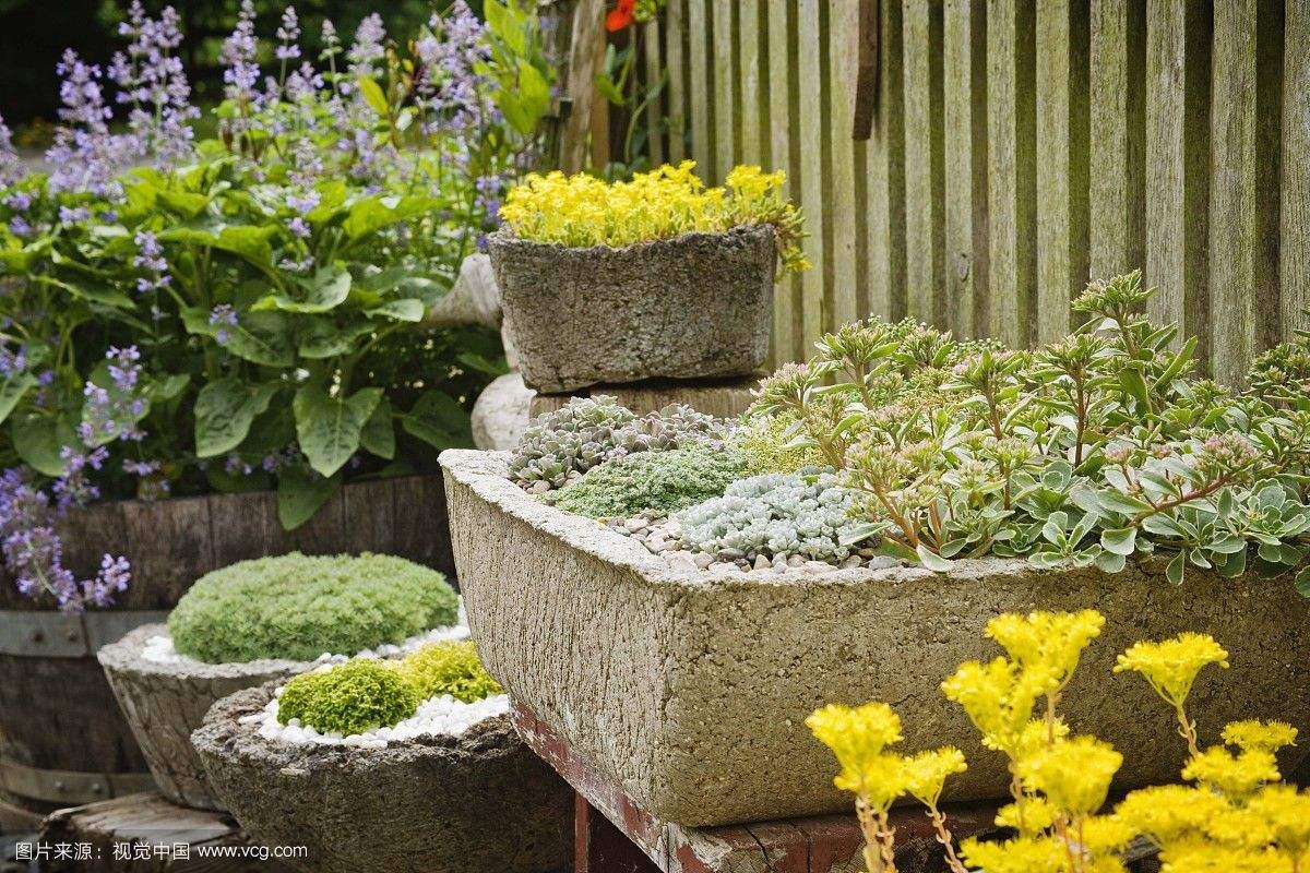 美丽的花艺搭配,从点滴改变生活!