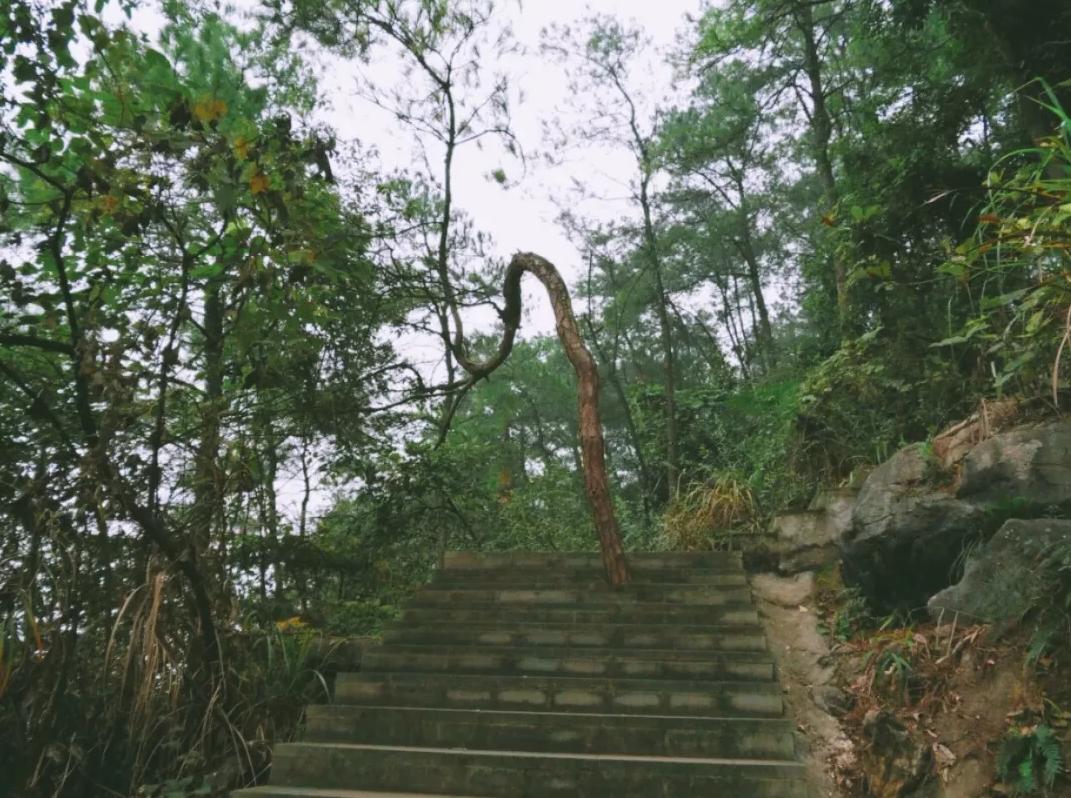 南山探秘|在碧桂园天麓,丈量重庆与时光的距离