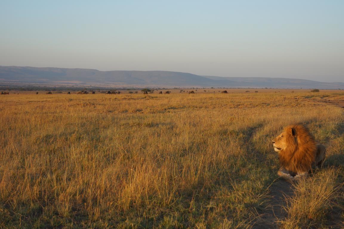 智库动态 世界狮子保护日 星巴主题直播
